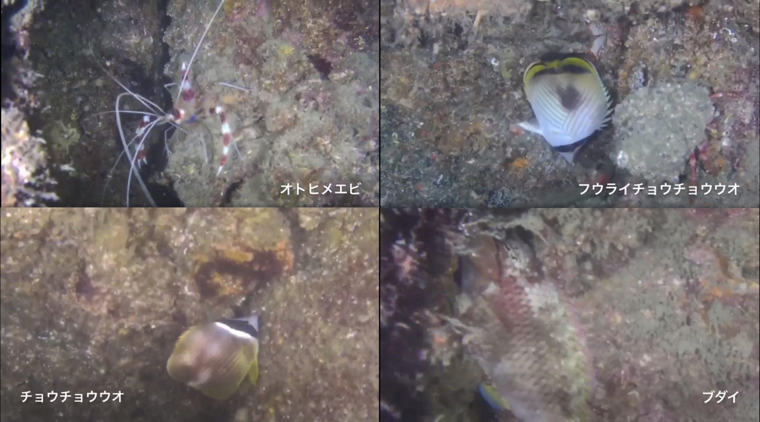 水中ドローンBW Space Pro水中生物の生態調査